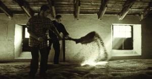 Omscheppen gemoute gerst op de eest vloer bij Highland Park